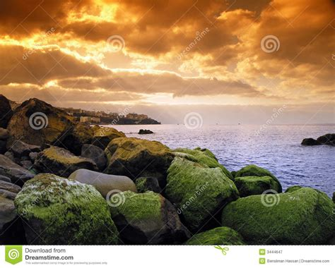 Medira Green madeira green seaweed royalty free stock photography image 3444647