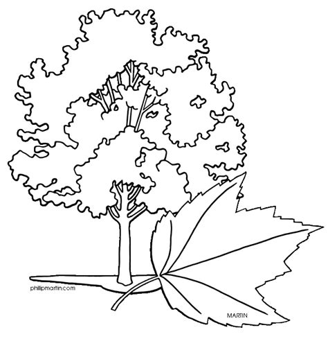 coloring page maple tree maple tree coloring page az coloring pages