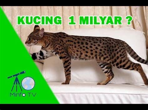 5 kucing termahal di dunia