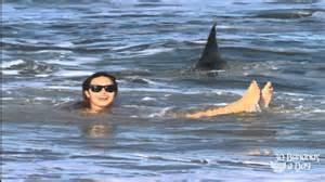 German backpacker shark attack off australian sydney beach real or