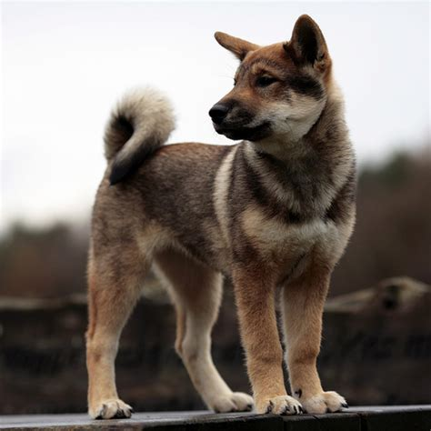 8 Cool Breeds by Cool Dogs Breeds Www Pixshark Images Galleries