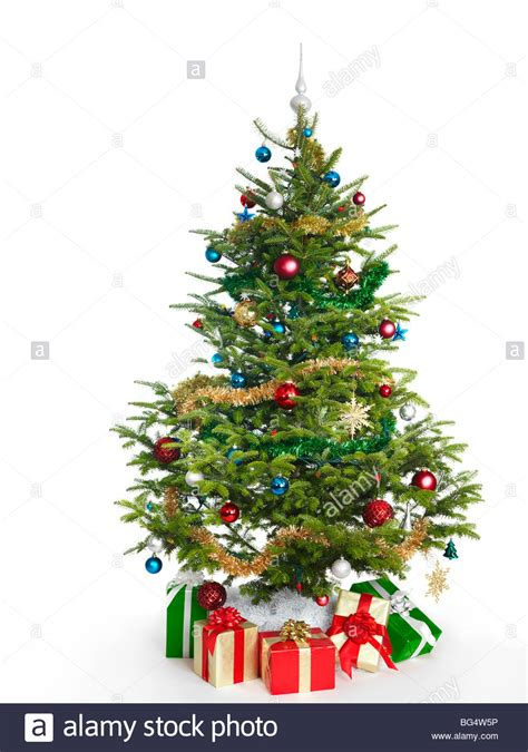 where to buy real christmas trees in suffolk real tree stock photos real tree stock images alamy