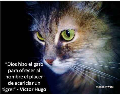 imagenes de gatos tristes con mensajes im 225 genes bonitas de gatitos con mensajes