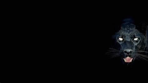Black Jaguar Hd Wallpaper Download | black jaguar wallpapers hd download
