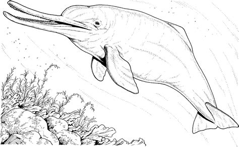 river dolphin coloring page dolphin coloring pages