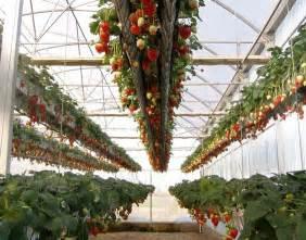 Aeroponic Vertical Garden Aeroponic Strawberries On Http Www Aeroponichowto