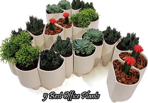 best office plant good office plants 2017 office plants
