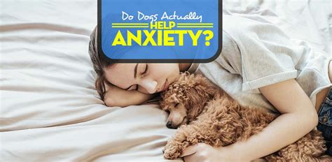 dogs help anxiety do dogs help anxiety here s what you must before adopting
