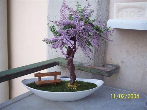 glicine in vaso prezzo bonsai di glicine feste bomboniere di supermamma