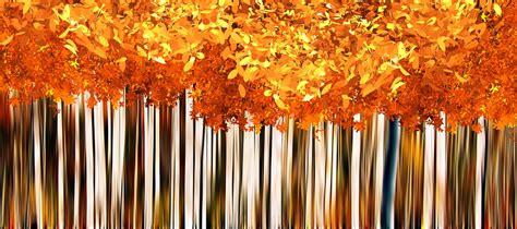 fall autumn background  image  pixabay