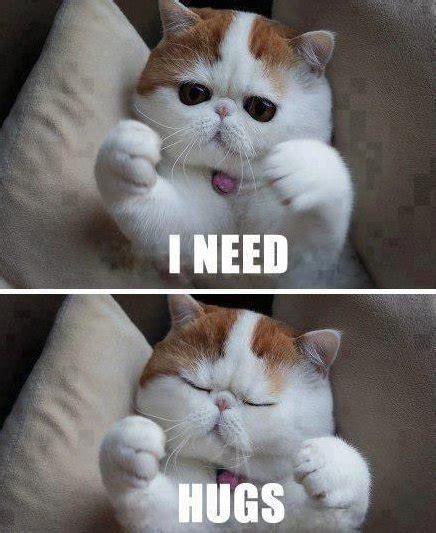 Meme Hug - hug meme