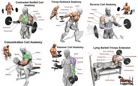 best arm workout for mass arm workouts