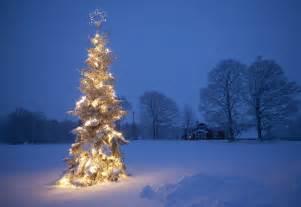 outdoor christmas tree a winter image of christmas tree