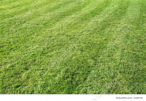 plants freshly cut grass  lines stock picture