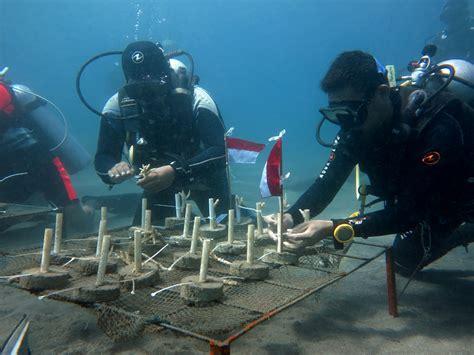 Bibit Terumbu Karang penanaman sejuta karang dari marinir untuk laut indonesia