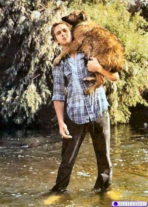 gosling holding a puppy 17 best images about on gosling and globes