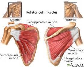 rotator cuff muscles medlineplus medical encyclopedia image