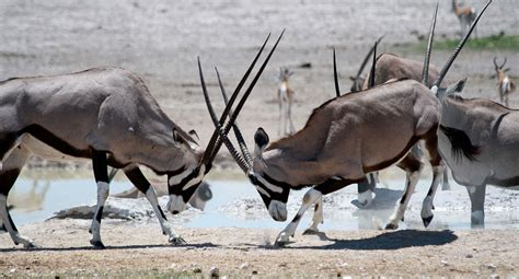 cool exotic animals  tanzania  slow road travel blog