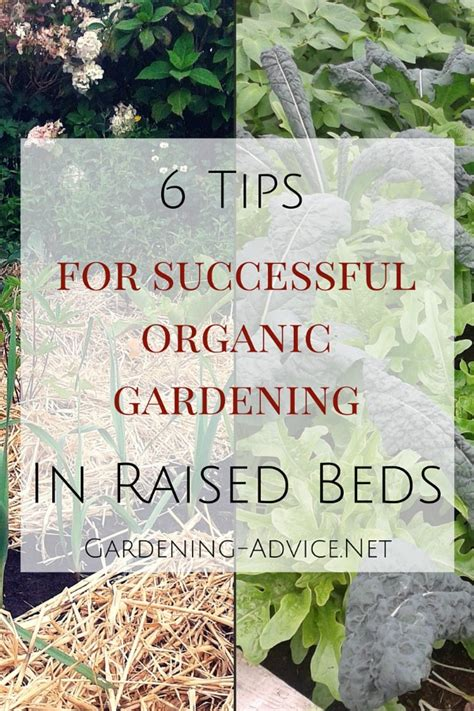 organic gardening affiliate programs 6 tips for growing vegetables in raised beds efficiently