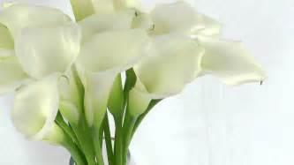 Pink Lilies White Mini Calla Lilies Fresh Cut Calla Lily Flowers Youtube