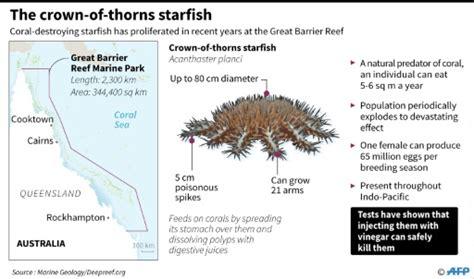 Website Of The Week Starfish by Vinegar Offers In Barrier Reef Starfish Battle