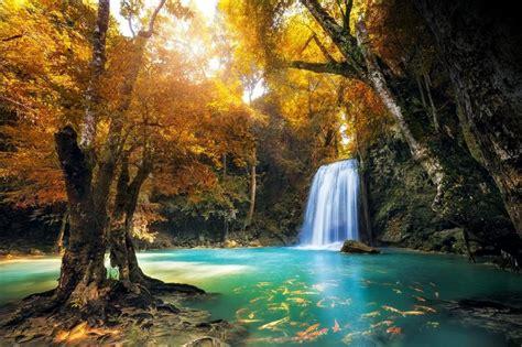 por una gentil floresta 8426374646 as 13 florestas mais bonitas do mundo segundo a national geographic