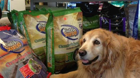 pet stores in nh that sell puppies pet pantry provisions visit exeter nh