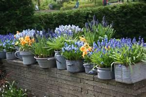 Outdoor Flower Pots Growing Bulbs In Outdoor Containers Garden Bulb