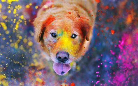 dogs india holi petimals
