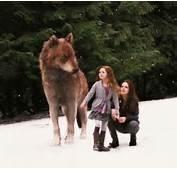 Twilight Saga Jacob And Renesmee