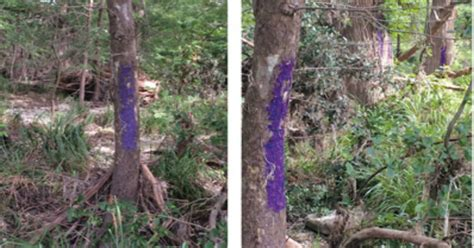 purple paint law there s a serious reason why you should immediately turn