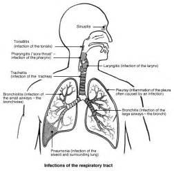 What Is The Respiratory System  Diagram And Function sketch template