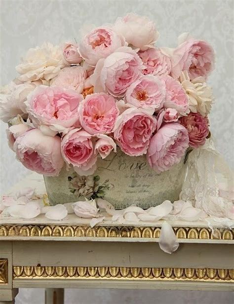 23 best garden roses look like peonies images on