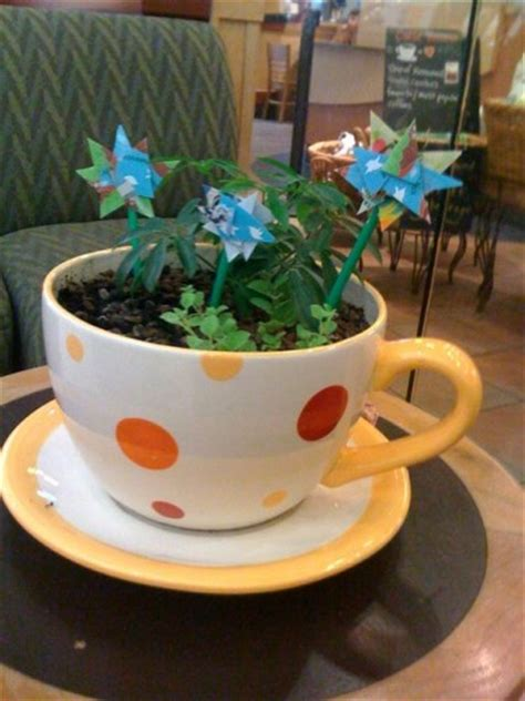 coffee cup planter food and drink pictures