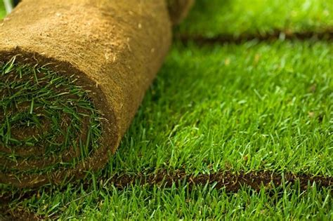 tappeto erba vera prezzi prato a rotoli prato erba a rotoli