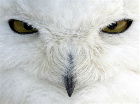 jfk airport shooting snowy owls on sight business insider