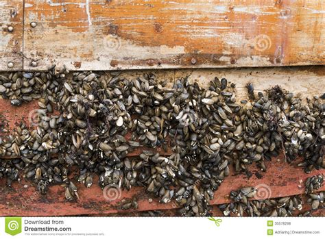 what are barnacles on a boat barnacles on a boat amazing wallpapers