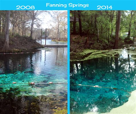 fanning springs state park springs of the lower suwannee florida hikes