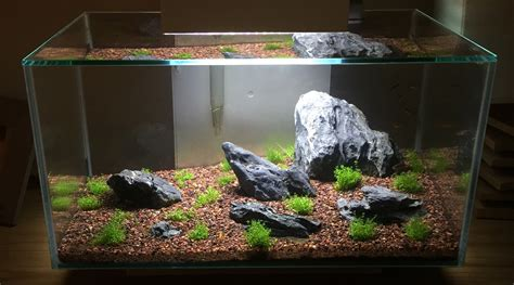 Fluval Edge Aquascape by Fluval Edge Iwagumi Attempt Aquascaping World Forum