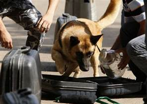 News For Dogs Book Report by Nigeria To Deploy Bomb Detection Dogs To Airports Seaports Premium Times Nigeria