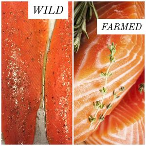 Hezzel Farm Salmon 90 S farm raised vs fish and other seafood