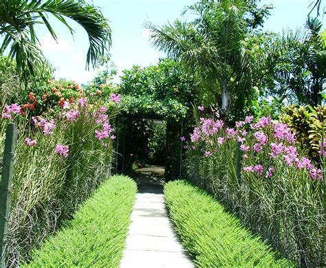 Backyard Plants plants for tropical gardens