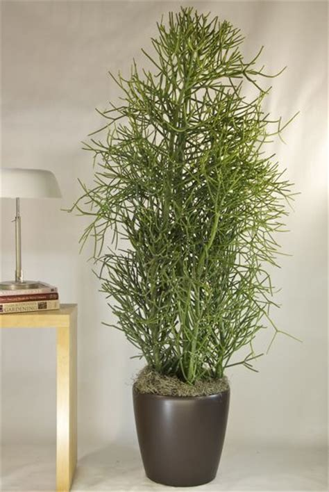 houston s online indoor plant pot store extra large 1000 images about plants that make a statement on