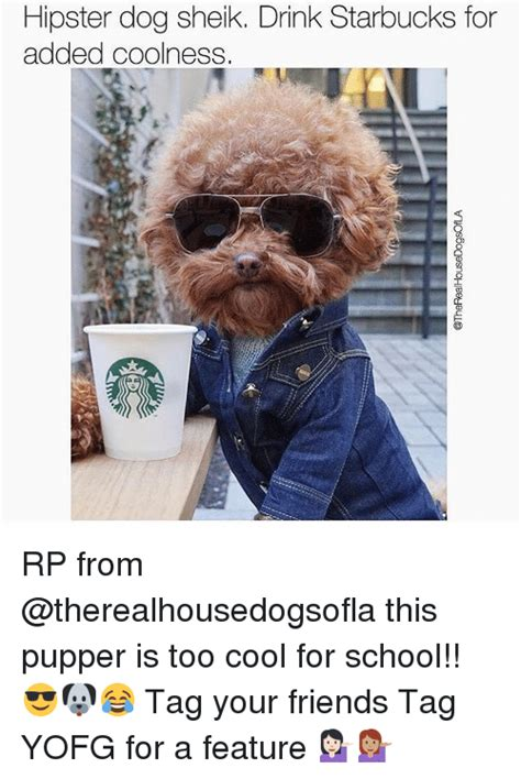 starbucks puppy drink sheik drink starbucks for added coolness rp from this pupper is cool