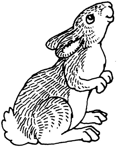 cottontail rabbit coloring page free rabbit coloring pages