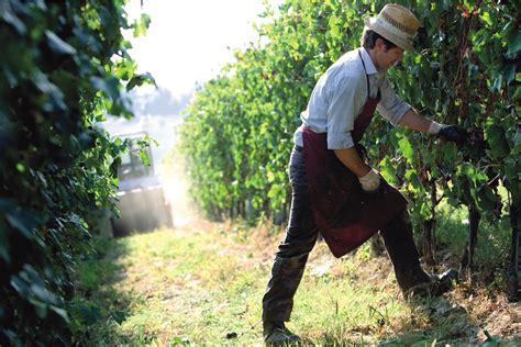 agostino pavia agostino pavia coeur wine co
