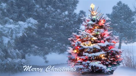 snow covered christmas tree background