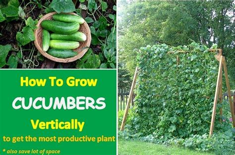 How To Grow A Vertical Garden Growing Cucumbers Vertically To Get A Bigger Harvest