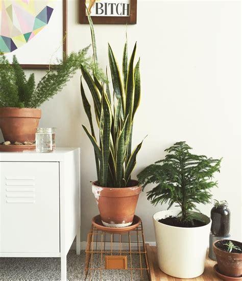 tanaman hias  apartemen  mempercantik ruangan