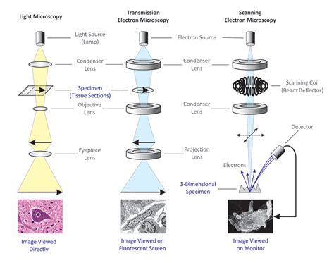 difference between l and light differences between light microscope and electron microscope